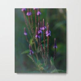 Pretty 'Lil Purple Metal Print