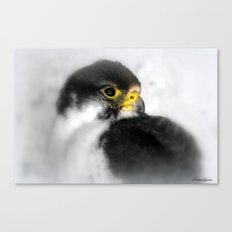 You Want Cute? Canvas Print