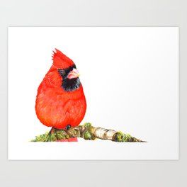 Mr Cardinal Art Print