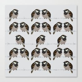 Little sparrows Canvas Print