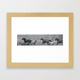 Harness Racing Framed Art Print