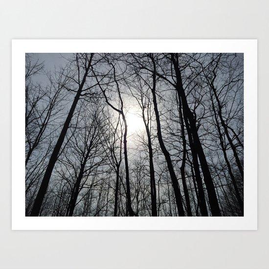 White Sky, Black Trees by derek_conrad
