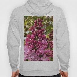 Sweet Lilacs Hoody