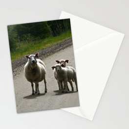 sheep on a country road Stationery Cards