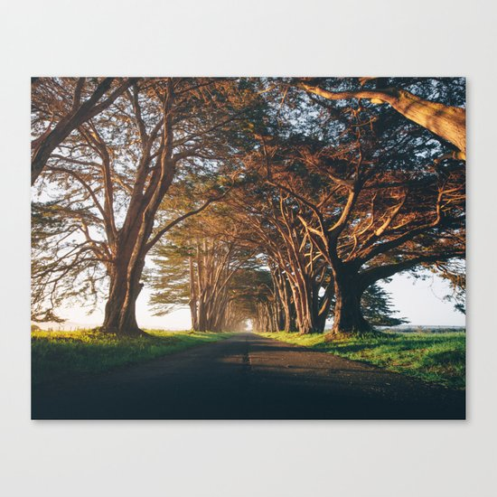 Sunrise at the Tree Tunnel - Point Reyes, California Canvas Print