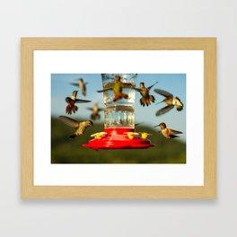 Hummers Framed Art Print