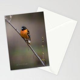 Lovely Oriole Stationery Cards