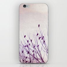 Birds in Tree Branches Photography, Purple Nature, Lavender Pastel Bird Photograph iPhone & iPod Skin