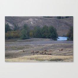 Elk Herd at Dusk Canvas Print