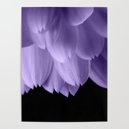 Ultra violet purple flower petals black Poster