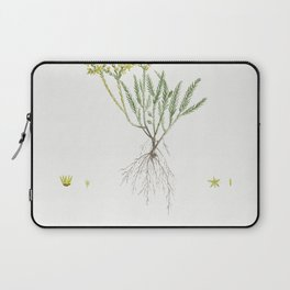 Sedum Sexangulare (Tasteless Stonecrop) from Histoire des Plantes Grasses (1799) by Pierre-Joseph Re Laptop Sleeve