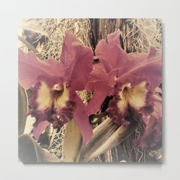 Muted Orchids Metal Print