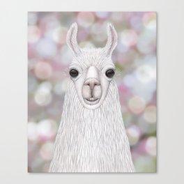 Llama farm animal portrait Canvas Print