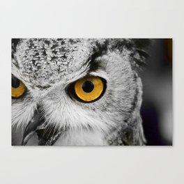 Black and white owl with golden eyes Canvas Print
