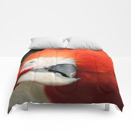 Scarlet Macaw Comforters