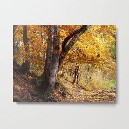 Fall afternoon IV Metal Print