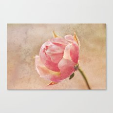 Pretty Little Rosebud. Canvas Print