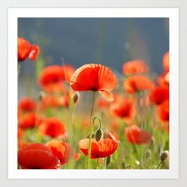 Red Poppies Flowers Art Print