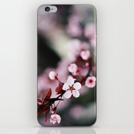 Pink Cherry Blossoms iPhone Skin