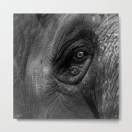 Portrait of an Elephant  Metal Print