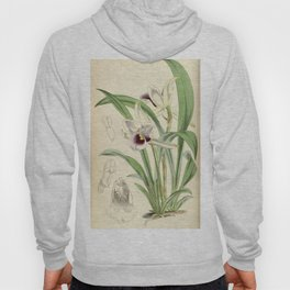 Cochleanthes discolor Orchid 1855 Hoody