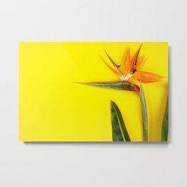 Bird of Paradise flower Strelitzia reginae, space for text Metal Print