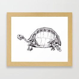 Anatomy of a Turtle Framed Art Print