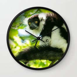Black-and-white Ruffed Lemur Wall Clock