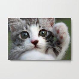 Greeting kitten Metal Print