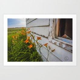 Farmhouse Lilies, North Dakota 3 Art Print