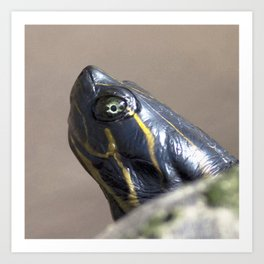 Watercolor Turtle, Eastern Painted Turtle 20, Suwanee River, Florida, Pretty Eyes Art Print