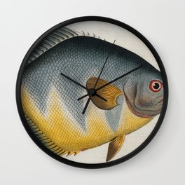 Vintage Illustration of an AngelFish (1785) Wall Clock