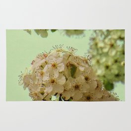 Spring Flowers on mint green background A377 Rug