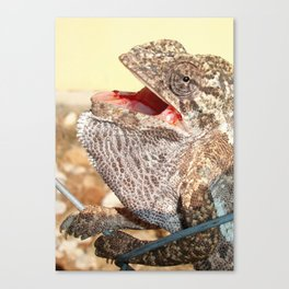 A Chameleon With Open Mouth Canvas Print