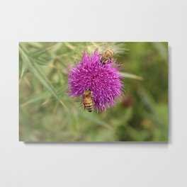 Bees Pollinating Thistle Metal Print