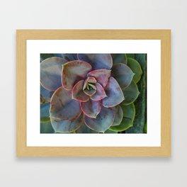 Plant Geometry Framed Art Print