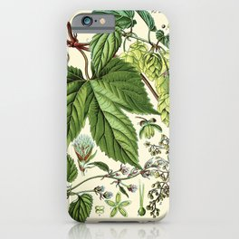 Humulus lupulus (common hop or hops) - Vintage botanical illustration iPhone Case