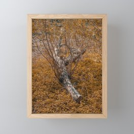 Fallen tree regrow in the forest Framed Mini Art Print