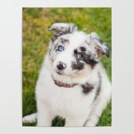 puppy Ben Poster