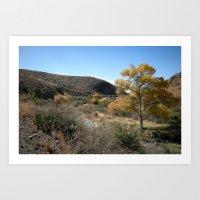 Pinto Canyon Art Print
