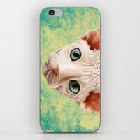 sphynx iPhone & iPod Skins featuring Sphynx by Cassidy Dawn