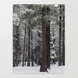 Winter Forest - Carol Highsmith Poster