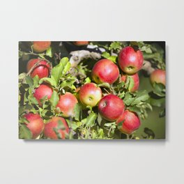 Gala Apple Tree Metal Print