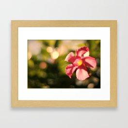 Pink Mandi Framed Art Print
