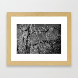 Spanish Moss Framed Art Print
