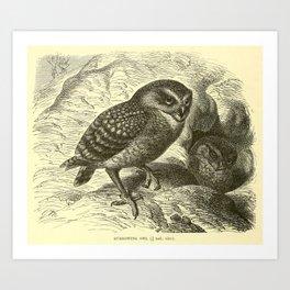 Burrowing owl (1893) Art Print
