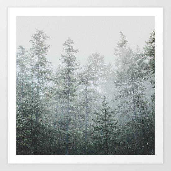 Deep Forest II Art Print