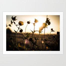 Summer Evening Art Print