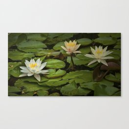 Lily Pads and Blossoms on a Michigan Pond Canvas Print