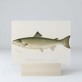Atlantic Salmon ( Salmo Salar); Fishes of North America illustrated by Sherman F. Denton (1856-1937) Mini Art Print